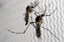 More locally transmitted Zika in U.S. expected: official