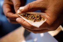 Israel looks to leverage tech in $50 billion medical marijuana market