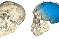 Moroccan fossils shake up understanding of human origins