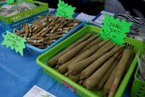 Canada`s top marijuana producer to double production