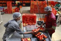 China's Alibaba invests $146 million in Indian online grocer BigBasket