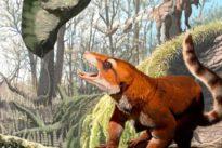 Fossil skull from Utah sheds light on primitive mammal group