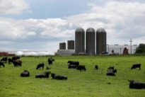 Iowa farmers wary of aid, trade wars but still turn out for Trump