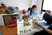 Putting on the dog: Thai ad agency employees bring pets to work