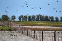 In flooded Argentine field, ducks swim where soy should sprout