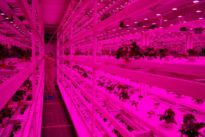 From sky farms to lab-grown shrimp, Singapore eyes food future