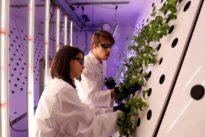 Czech lab grows mustard plants for Mars