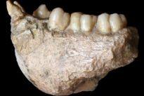 China's huge mysterious extinct ape 'Giganto' was an orangutan cousin