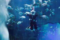 Santa Claus dives into hot climate issue in Paris aquarium