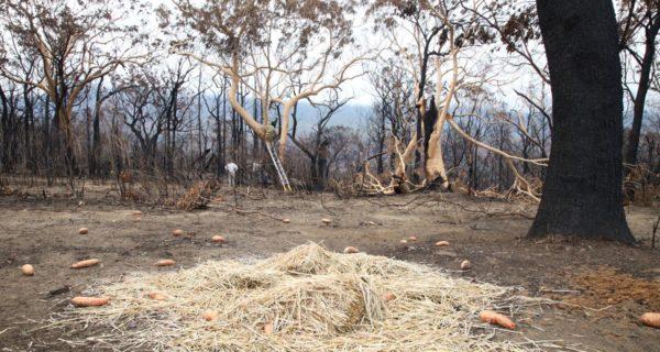 Australia's flame-scarred Kangaroo Valley calls for tourists to return