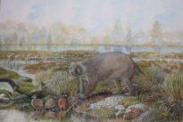 Bear-sized wombat cousin roamed Australia 25 million years ago