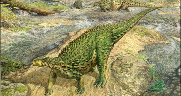 Long neglected after landmark discovery, armored dinosaur finally gets its due